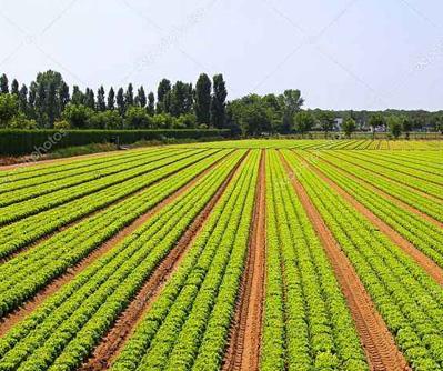 农业领域3