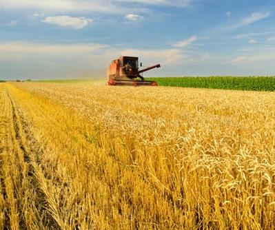 农业领域1
