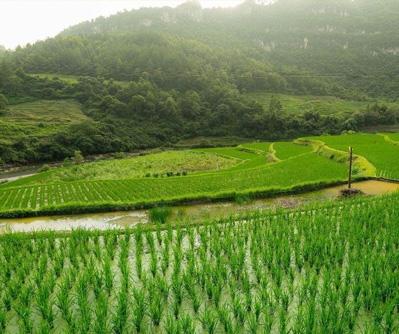 农业领域5