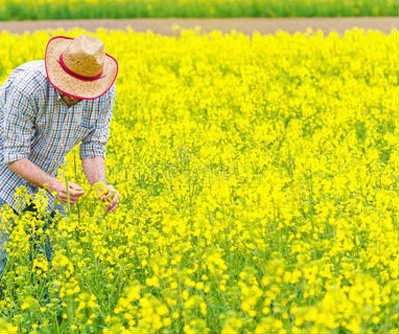 农业领域4